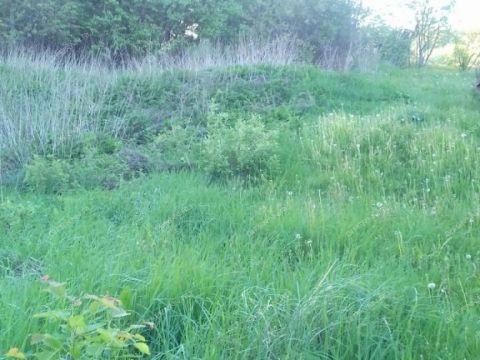 selo-varezh-pavlovskiy-municipalnyy-okrug фото
